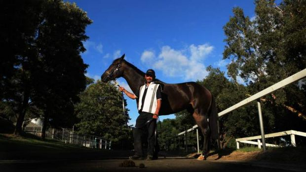 Ready to seize the moment: Samaready is the early favourite for the Black Caviar Lightning.