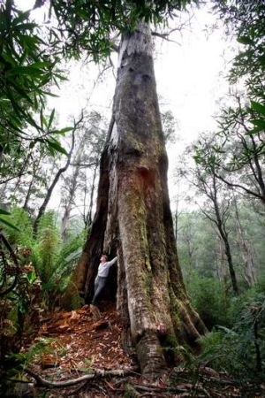 Wayne Heywood of Leadbeater Eco Tours supports the idea of a new national park.