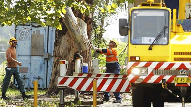 Arborists removing the tree.