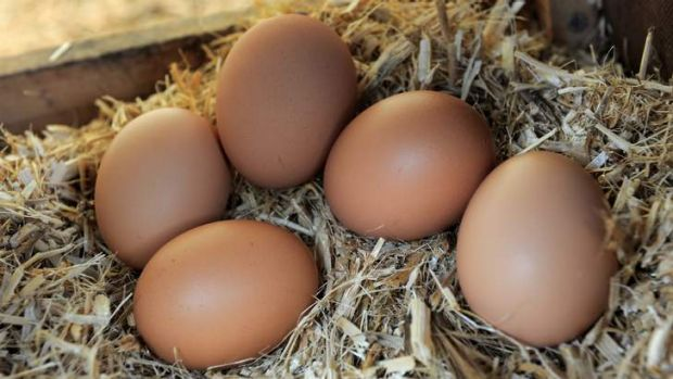 The ACT Government has banned battery cages and sow stalls.