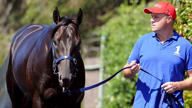 Planned assault: Trainer Danny O'Brien with Shamus Award.