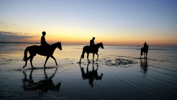 Fiorente during a trackwork session at Altona Beach this week.