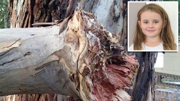 Tragedy: Bridget Wright (inset) and the damaged branch that killed her when it fell from a tree in her Pitt Town school.