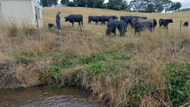 Cattle barrier: John Parker fenced the creek on his land.