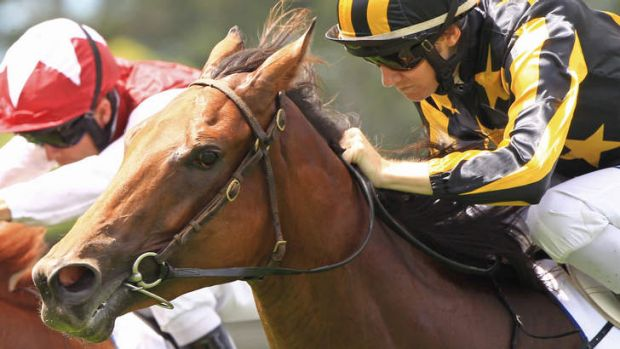 Run of success: Alpha Miss, shown winning at Rose Hill in early March, has added the Lonhro Plate to her list.