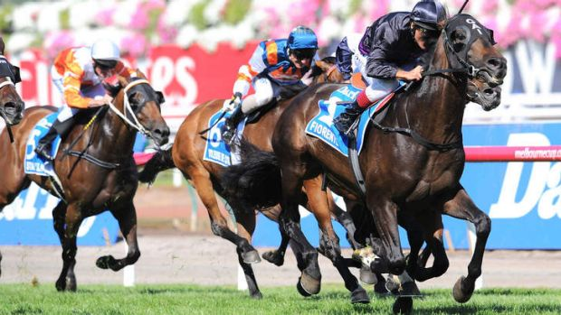 Drawcards: Fiorente and Damien Oliver win the Australian Cup on Saturday.