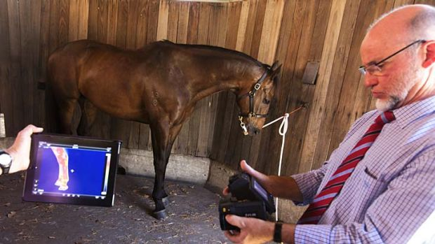 Getting the picture: Technician Sean Towner checks an image, also seen on the larger screen, of a horse's legs.