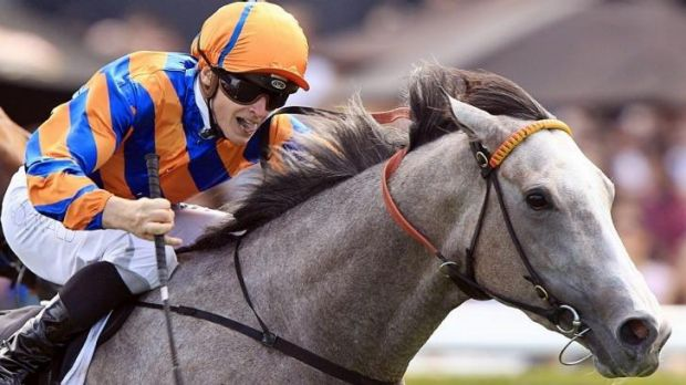 Up to the challenge: James McDonald rides Villa Verde to victory in the Challenge Stakes at Randwick on Saturday.