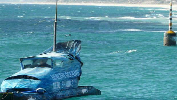 Shark drum line removed from sea