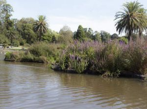 'The gardens have returned to some of their marshy origins.'