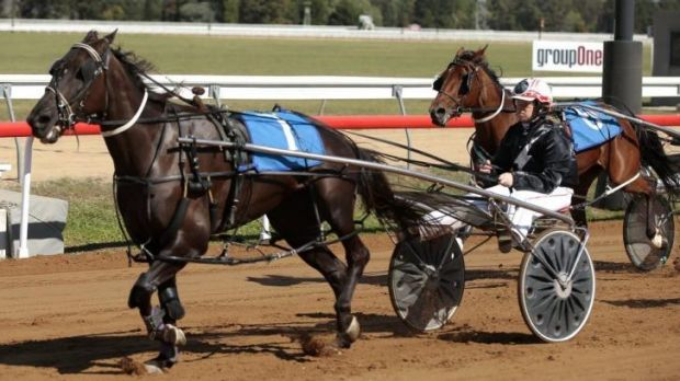 Driver Melissa Hawke guides Silk Banyula to win the Page Tavern Pace at Thoroughbred Park.