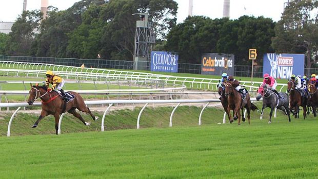 Leading the pack: Steps In Time, ridden by Jimmy Cassidy, rides out in front before winning the seventh race at Rosehill.