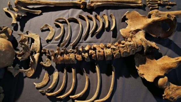 Clues to Black Death: One of 25 skeletons found by construction workers under central London's Charterhouse Square.