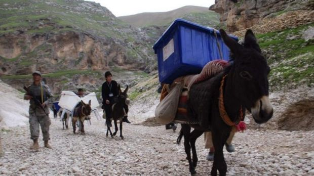 Bearing the load: Donkeys will carry ballot papers back to Kabul from the country's inaccessible areas.