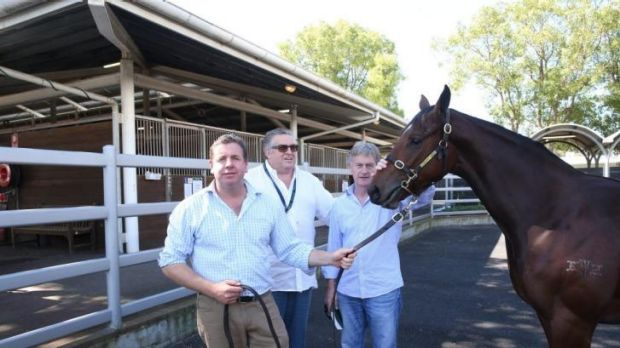 Special one: Mick Malone, Neil Werrett and Max Whitby with Golden Slipper hope Cornrow earlier this week.