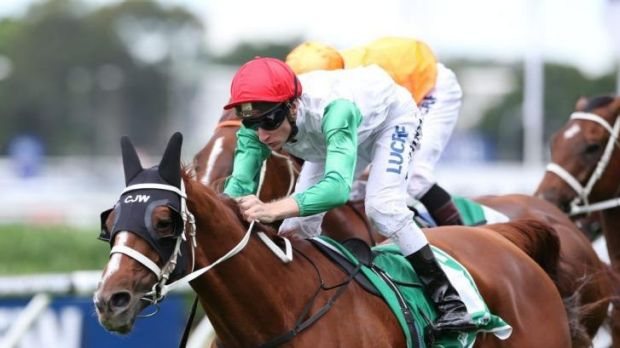 Randwick bound: Junoob will head to The Championships after Saturday's Neville Sellwood Stakes win.