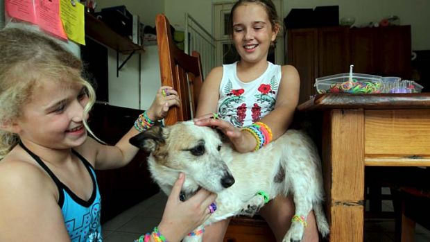 Canine capers: Isabelle (right) and Phoebe Myers get their dog into the loom band trend.