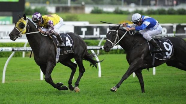 Nash Rawiller on Royal Descent finishes runner-up to Sacred Falls in the Doncaster on Saturday.