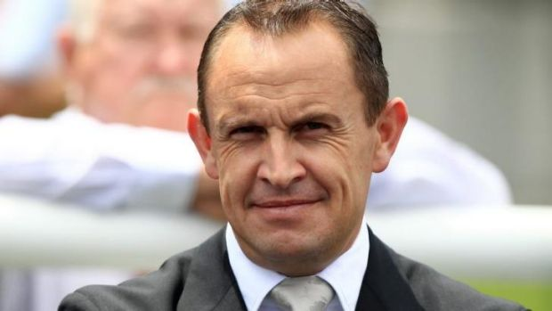Mile master: Trainer Chris Waller is now looking forward to the big races at Randwick on Saturday.