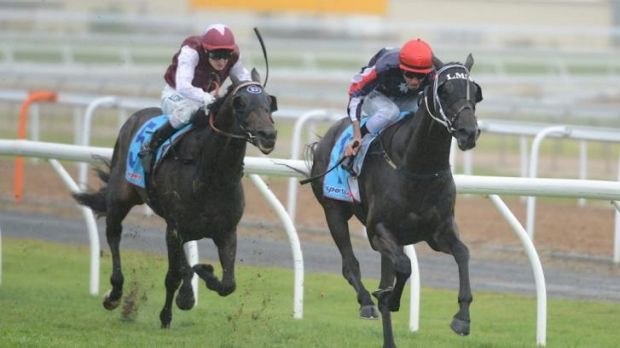 Just short: Tupac Amaru is beaten by Steven Arnold's Gamblin Guru on Geelong Cup day last year.