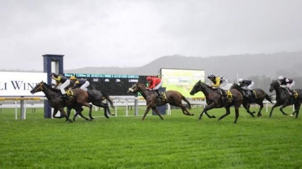 Made the cut: In Cahoots wins the Gosford Guineas on April 6.