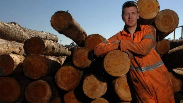 """Trunk call: Zac Shaw at work in Colac.  """"I'm doing what I want, I'm happy."""""""