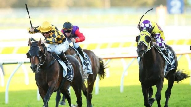 Too good: James McDonald pilots It's A Dundeel to victory in Saturday's Queen Elizabeth Stakes, a race which proved to ...