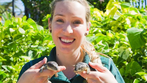 Zoo reptile keeper Emily Trainer with the two new baby shingleback skinks.