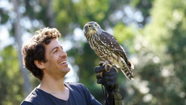 <i>Healing</i> star Don Hany with a barking owl at Healesville Sanctuary last week.