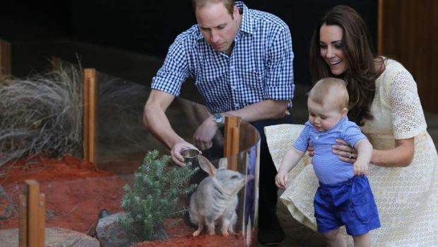 Slow news week: Prince William and the Duchess of Cambridge introduce Prince George to a bilby.