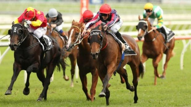 Go-getter: Go Indy Go (right) wins the Champagne Stakes at Randwick on Saturday.
