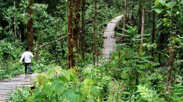 Zero to hero: Asia Pulp and Paper has promised to restore or protect 1 million hectares of Indonesian forest from ...