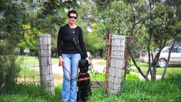 Jo Weir's $30,000 trained guide-dog Wiley gets distracted by uncontrolled pet dogs.