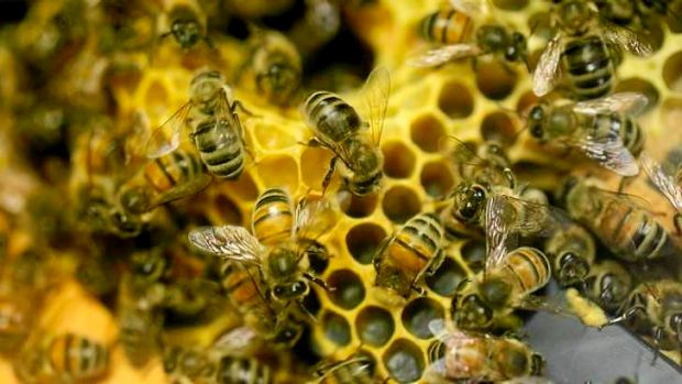 Bee hives worth about $2000 have been stolen from a property near Ipswich.