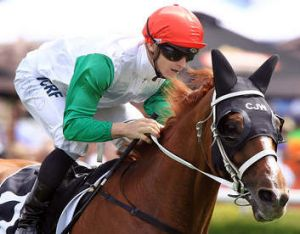 One to watch: Chris Waller's Junoob contests the Hollindale Stakes on the Gold Coast on Saturday.