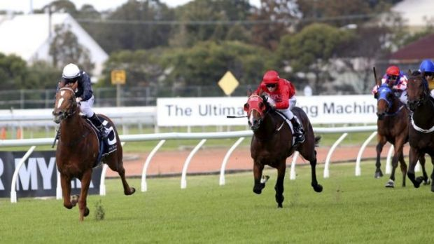 Bombs away: Bomber Brown wins the Juvenile Stayer Handicap at Rosehill on Saturday.
