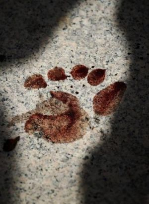 A bloody footprint at the site of the Democracy Monument attack in Bangkok on Thursday.