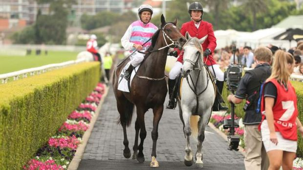 Star mare Two Blue with jockey Damien Oliver at Royal Randwick.