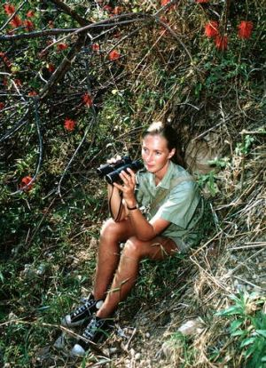 Jane Goodall observing chimpanzees in the 1960s.