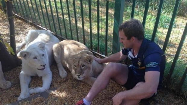 Brumbies back Pat McCabe enters the lions den in South Africa.