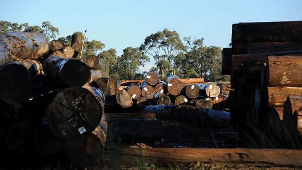 The sawmill where senator-elect Ricky Muir works.