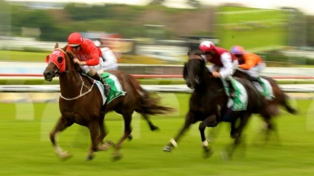 Gerald Ryan's speed machine Hot Snitzel lines up in the QTC Cup on Saturday.