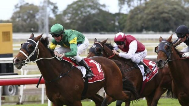 Confident: Nash Rawiller wins with Moriarty at Eagle Farm on Saturday.