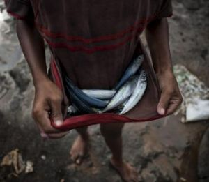 A boy carries fish in his shirt in Masinloc.