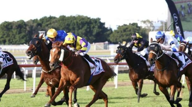 Staying power: Sonntag wins the Queensland Derby at Eagle Farm on Saturday.