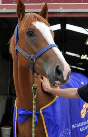 Sheer Style earned more than $170,000 during a Magic Millions campaign.