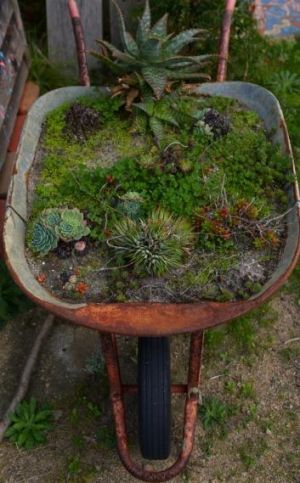 No space wasted: An old wheelbarrow finds a new purpose at the Rosebud program.