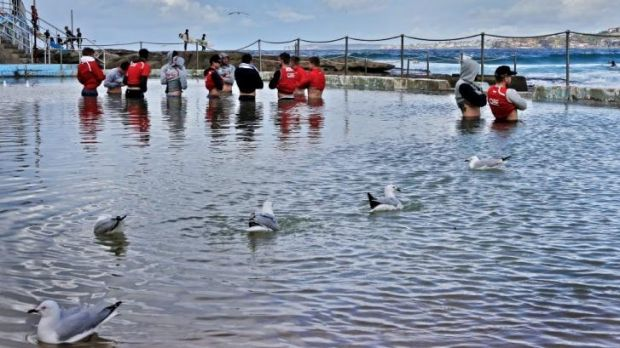 Swans and seagulls: Sydney players ice their legs at Bondi rock pool on Monday following their win over the Suns on Sunday.