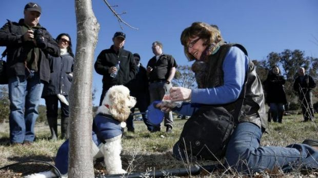 Snuffle the truffle dog at Ruffles Estate with owner Sherry McArdle-English during a truffle hunt as part of the ...