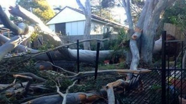 Wild weather: Winds brought down trees at Hornsby Heights.